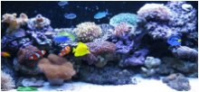 Our Reef Marine Aquarium